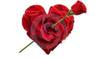 heart-shaped-rose-10107614